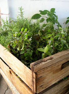 Box of Growing Herbs